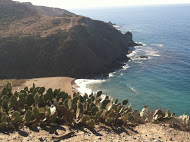 Tripps Travel Network Reviews the Ocean, the Beach, and the Cacti of Catalina Island
