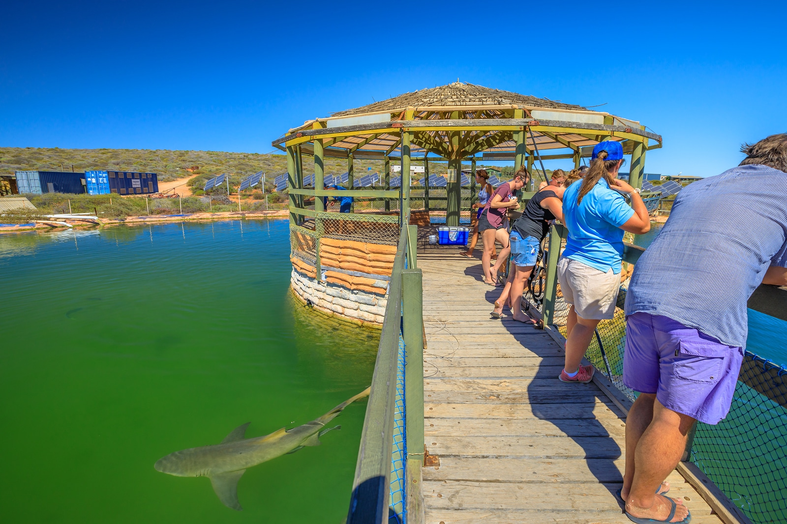 Tripps Travel Network Reviews Shark Bay (2)